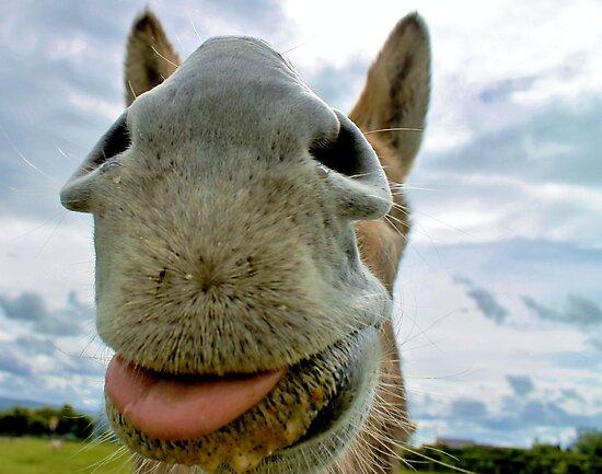 Donkey Humour by Ladymoose