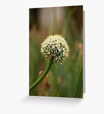 Onion flower Greeting Card