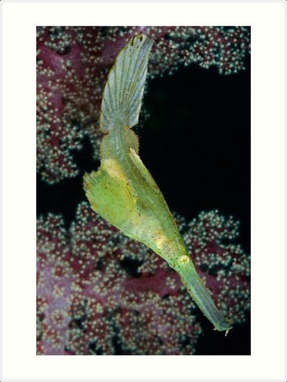 Robust Ghostpipefish by MattTworkowski