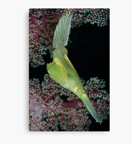 Robust Ghostpipefish Canvas Print