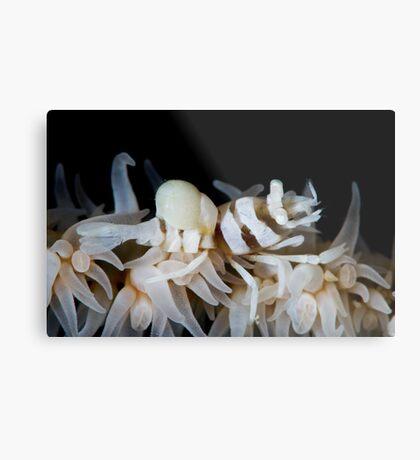 Zanzibar Shrimp & Isopod Metal Print