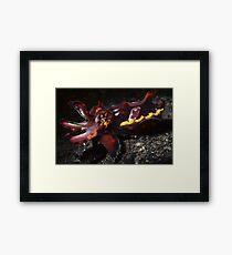 Flamboyant Cuttlefish  Framed Print