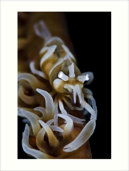 Zanzibar Shrimp by MattTworkowski