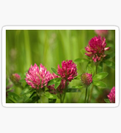 Simple beauty of red clover Sticker