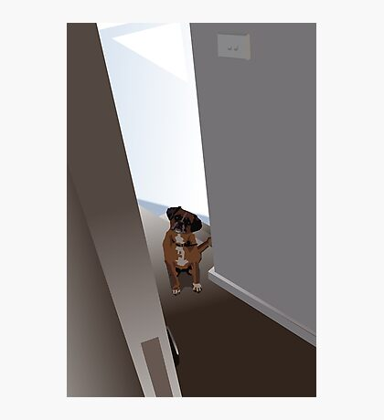 Dog in the doorway who shouldn't be there Photographic Print