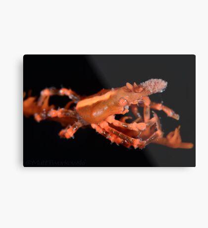 Orange Xeno Crab Metal Print