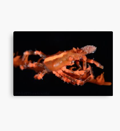 Orange Xeno Crab Canvas Print