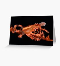 Orange Xeno Crab Greeting Card