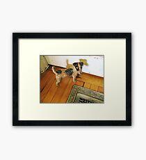 A Registered Door Dog Framed Print