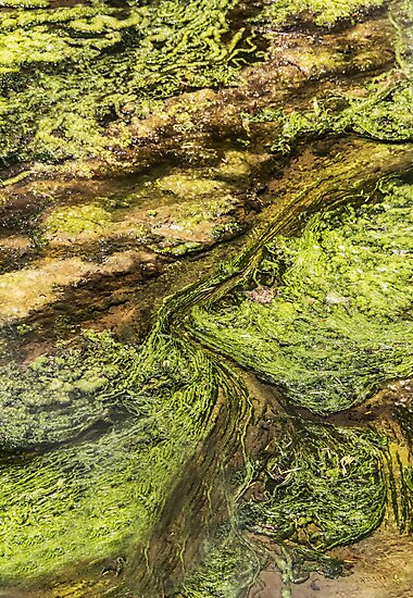 Slime Season On The Planet Zorg by Heather Friedman