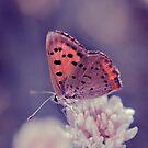 Tiny Beauty by EkaterinaLa
