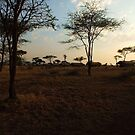 Serengeti by Sheila Smith