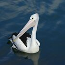 Lunch with a Pelican by adbetron