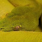 Green Eye by Dave Cauchi