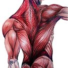 Muscle Study by painted-lizard