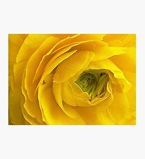 Unculus Ranunculus Photographic Print