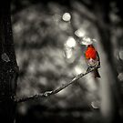 Robin (Selective colouring) by larry flewers