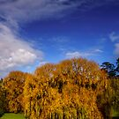 Last of Autumn Colour - Ocean Grove Victoria by Graeme Buckland