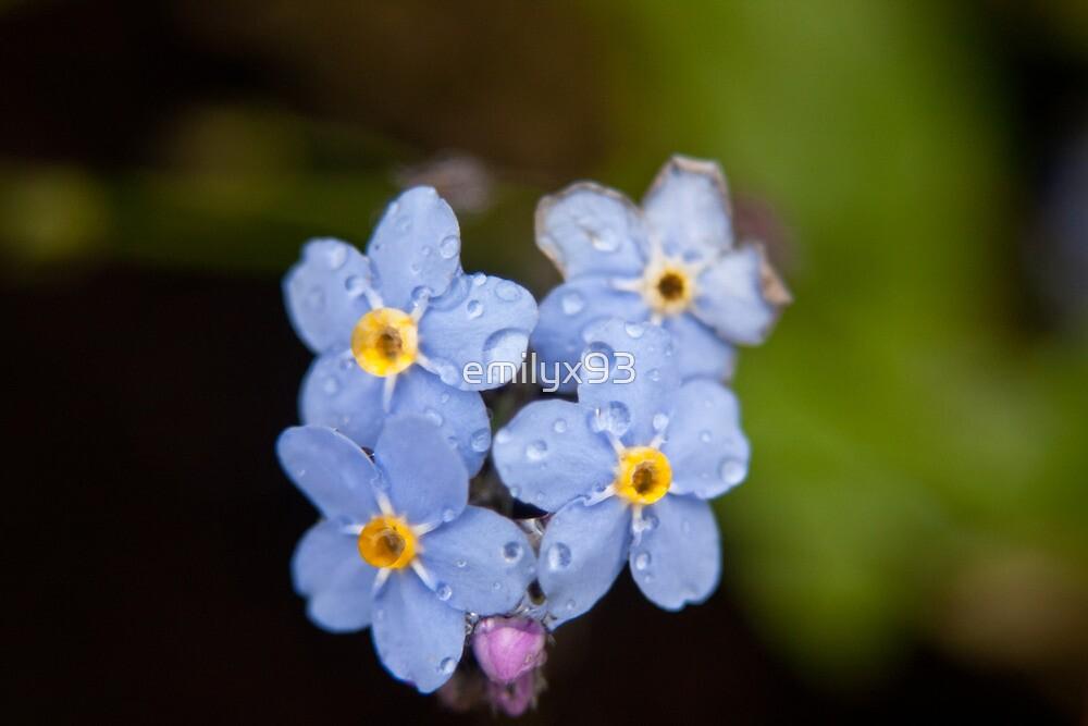 Blue Flowers by emilyx93