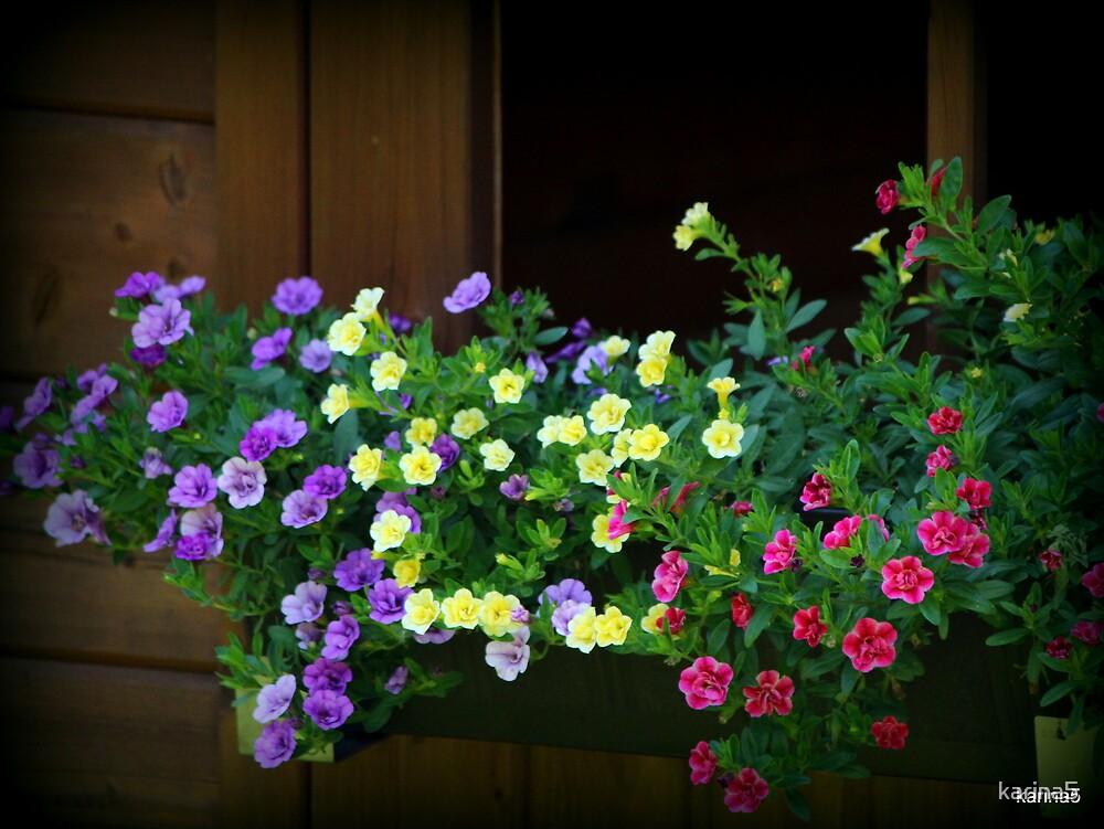 Flower Box by karina5