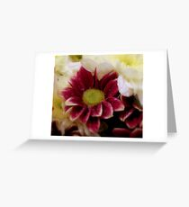 Soft Touch... Greeting Card