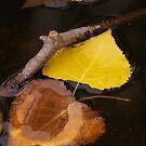 Thinking of fall by Denitsa Prodanova