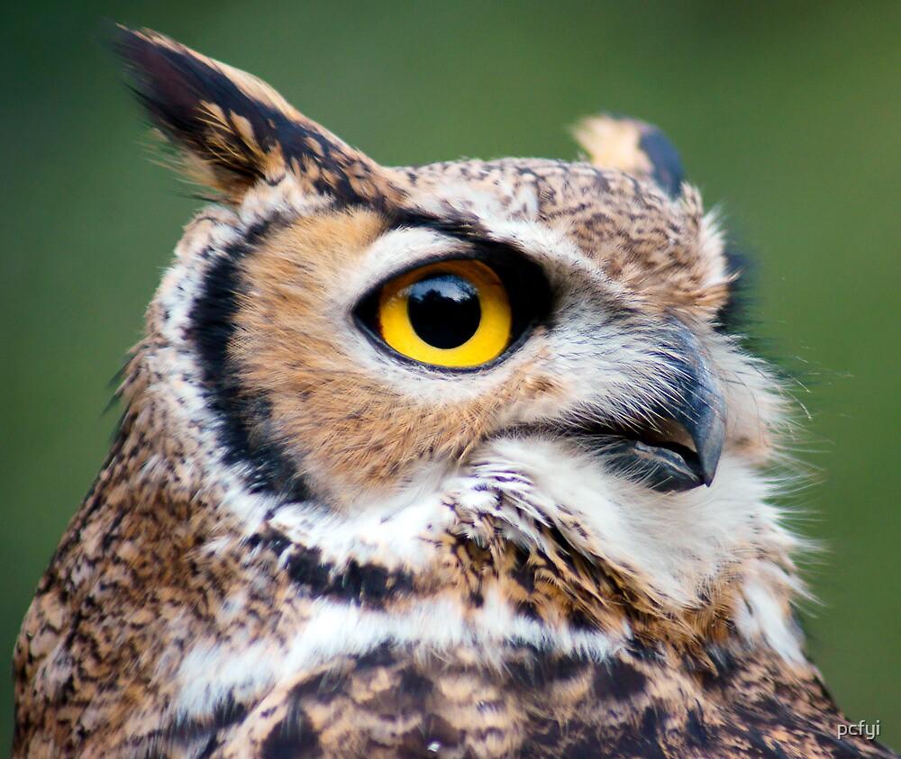 Owl ll by pcfyi
