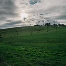 Yarra Valley Victoria Australia by grorr76