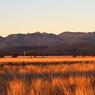 Nandewaa Range from Maules Creek Road by Elizabeth McPhee
