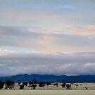 Winter view from Stoney Creek Road, Narrabri  by Elizabeth McPhee