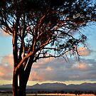 Sunset view of Nandewar Range by Elizabeth McPhee