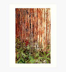 Rain Forest Dusk Art Print