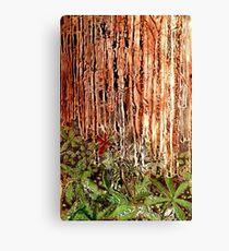 Rain Forest Dusk Canvas Print