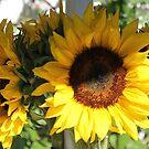 sunflower bouquet  by Tim Horton