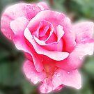 1708-beautiful rose by elvira1