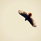 Hawk, Over-exposed by Joshua Greiner