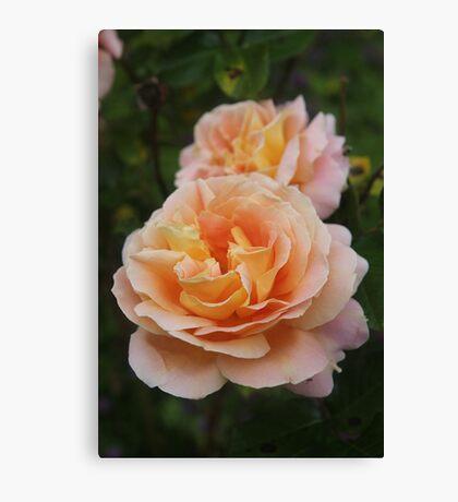 Summer Garden Roses Canvas Print