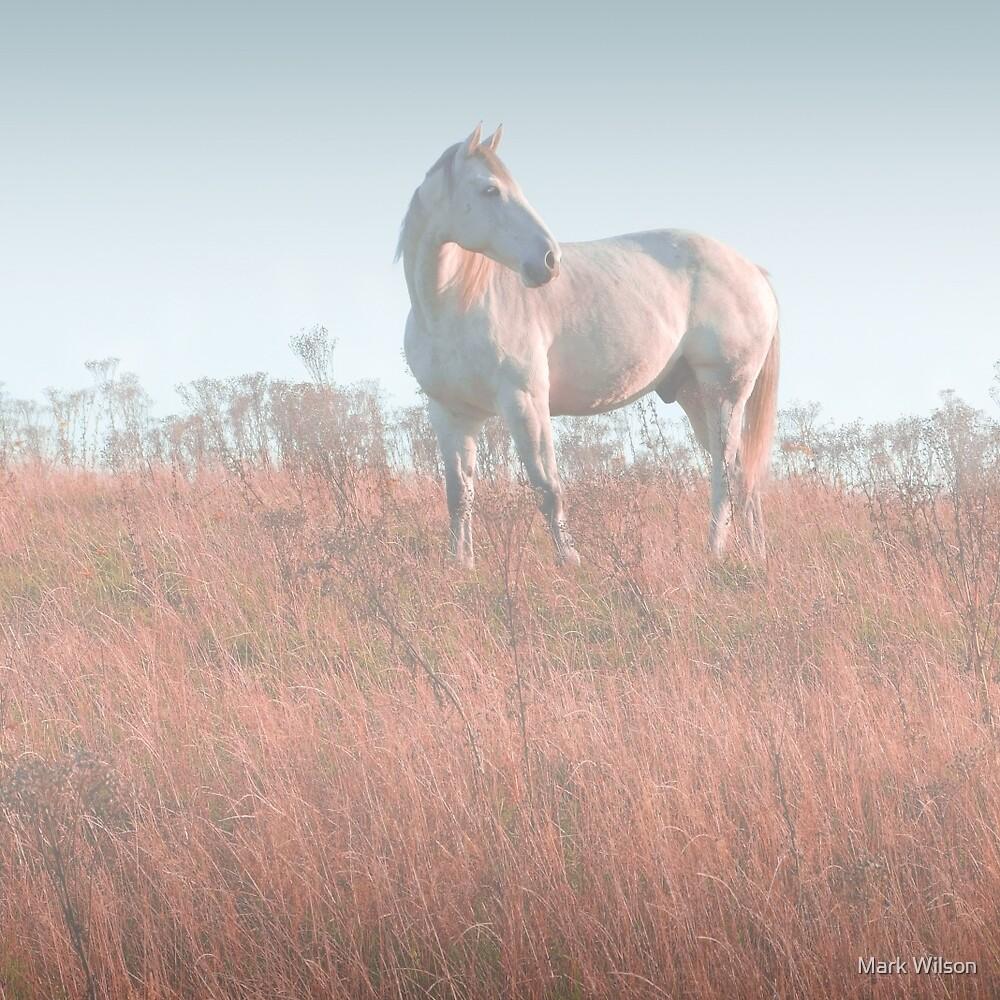 White Horse by Mark Wilson