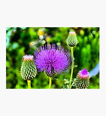 Totally Thistle Photographic Print