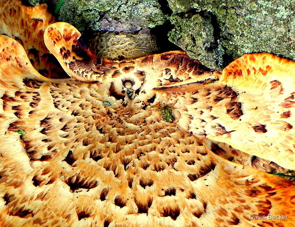 Fungi by Dawn Becker