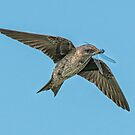 Purple Martin with Dinner by toby snelgrove  IPA