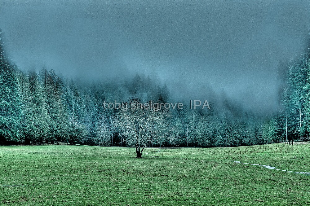 Lone Tree in the Fall by toby snelgrove  IPA