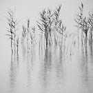 Ripples & Reeds by Michelle Munday