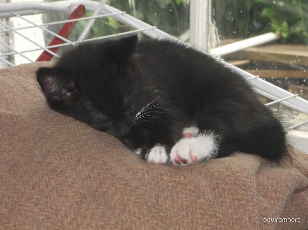 Kitten Asleep -(190613)- Digital photo/Fujifilm FinePix AX350 by paulramnora