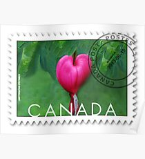(✿◠‿◠) BLEEDING HEART CANADIAN POSTMARK STAMP (✿◠‿◠) Poster