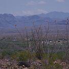 Green and Grey - US-Mexico Border - Rio Grande - Lajitas - West Texas by seymourpics