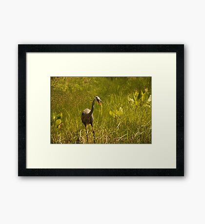 Urban 'Great Blue Heron' say's Hello! Framed Print