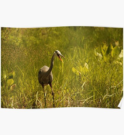 Urban 'Great Blue Heron' say's Hello! Poster