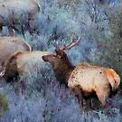 Spring Elk by Betty  Town Duncan