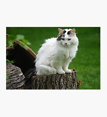 Princess Gracie Spies a Squirrel Photographic Print